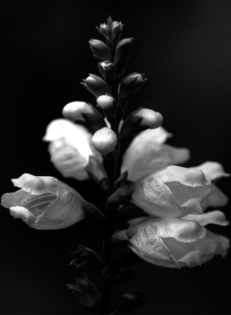 White-flower.rs