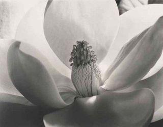 Cunningham_magnolia-blossom.rs
