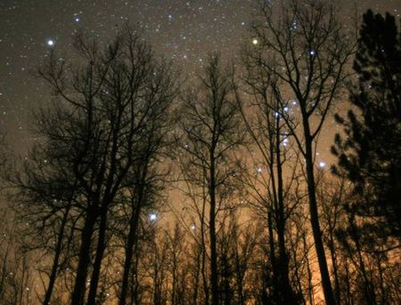 Orion-stars-in-trees-rs