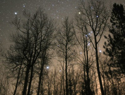 Orion-stars-in-trees-Oct17_2010S-400x304