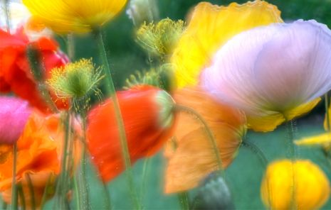 Pastelpoppies.rrs