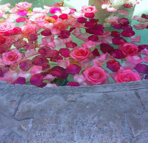 A fountain of roses2.jpeg
