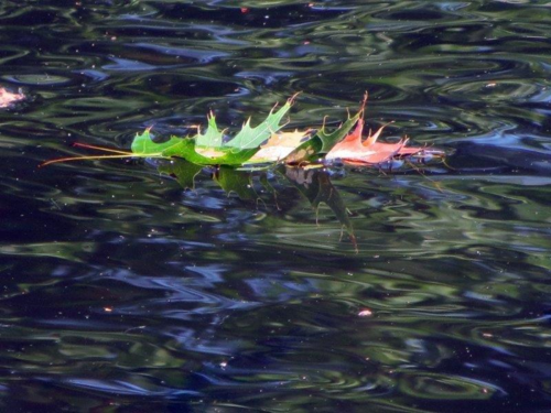 Leaf in pond 9 21 14 (1)-1