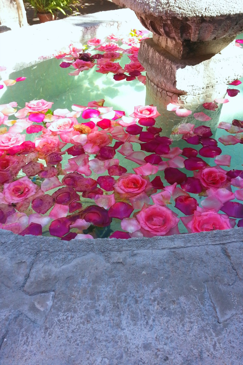 A fountain of rosespm